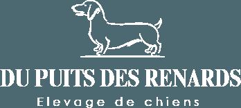 Du Puits Des Renards - Fraipont - Elevage de chiens – Teckel à poils durs et Rouge de Bavière
